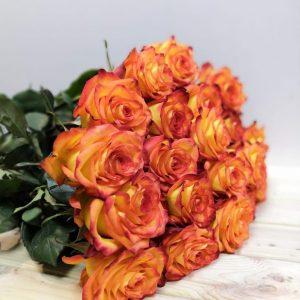 Роза Хай мейджик