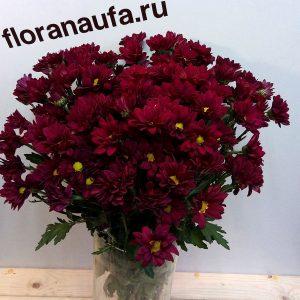 Хризантема кустовая Мерлот